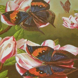 1969 Ralph Coventry Butterfly Print Kallima 16365
